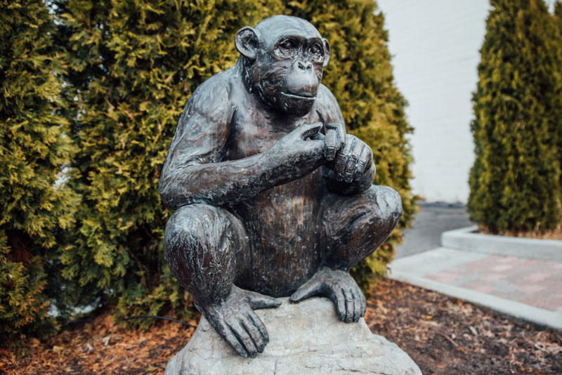 Chimpanzee statue