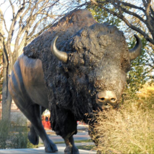 buffalo sculpture images