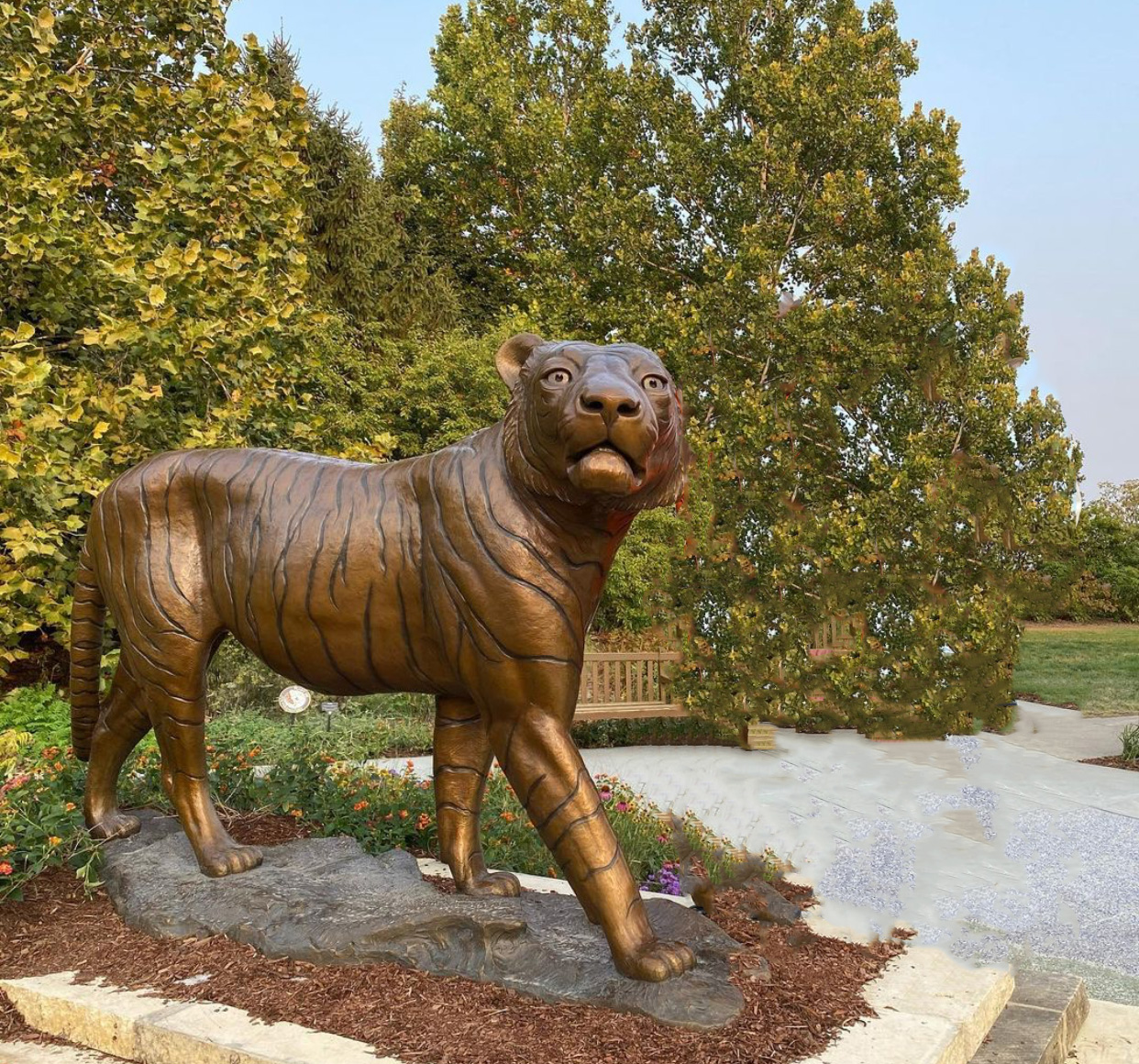 Animal Bruce Tiger Bronze Sculpture by Kent Ullberg Sculptor