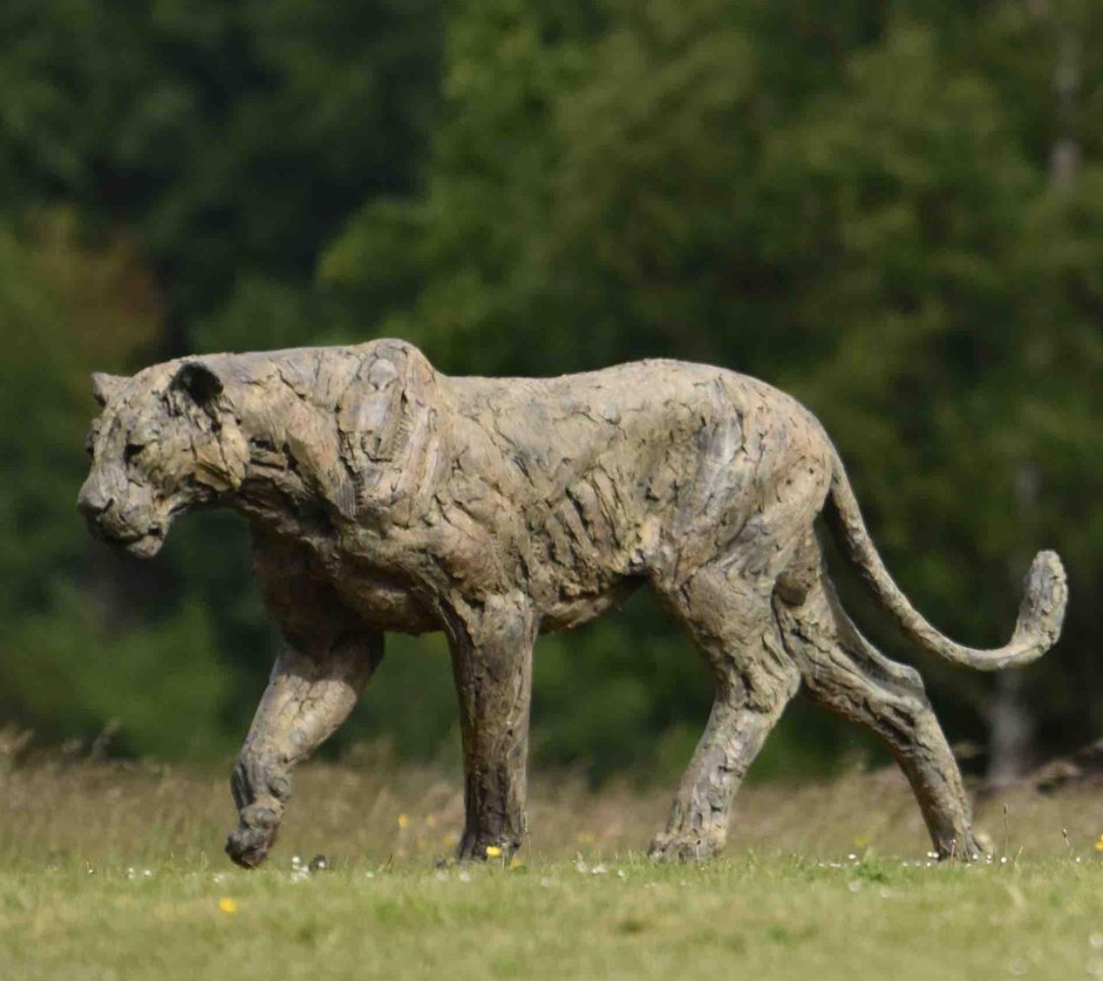 Outdoor Animal Lioness Life Size Bronze Sculpture by Hamish Mackie
