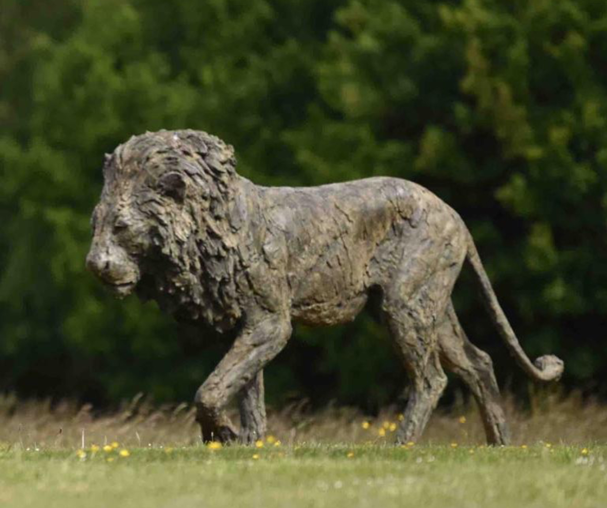 Life Size Lion Bronze Animal Ornament Sculpture by Hamish Mackie