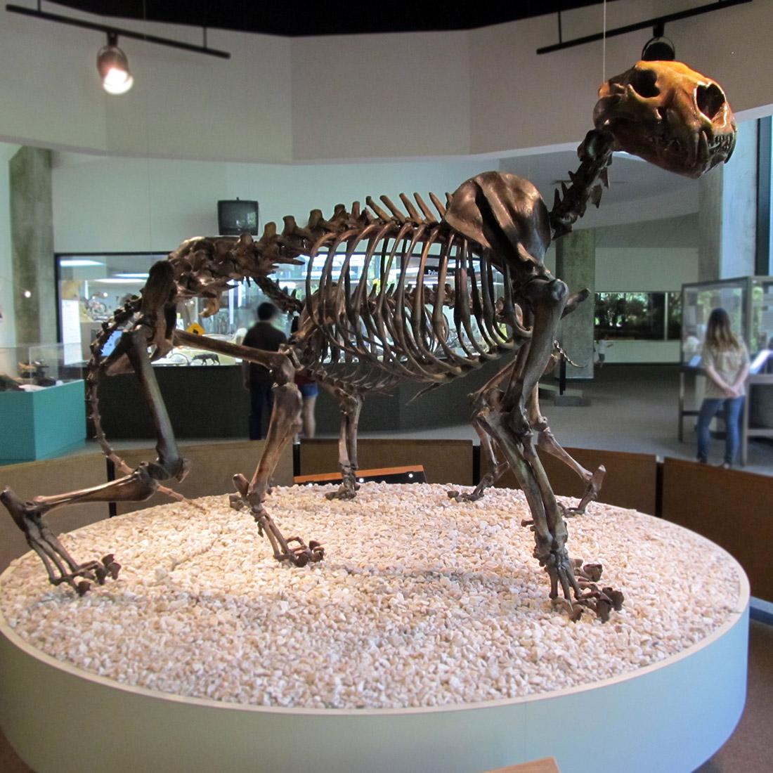 Large Bronze Extinct Animal Dinosaur Skeleton Interior Decoration Statue