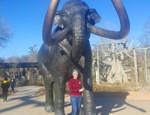 Antique elephant statues garden art statue