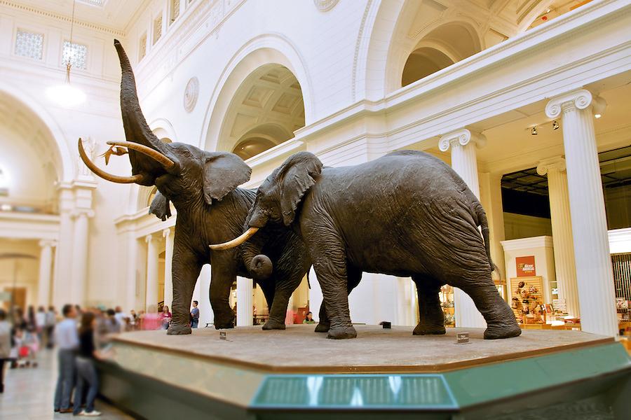Field statue of elephants