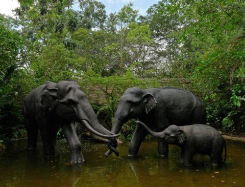 Outdoor Bronze Life Size Elephant Family Sculpture