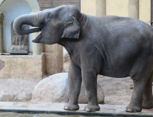 Life Size Standing Bronze Large Lucky Elephant Statue