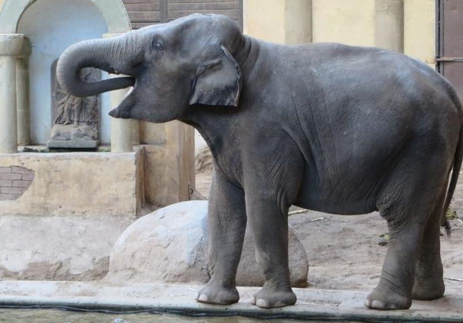 lucky elephant statue